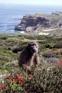 0730 Cape Point2